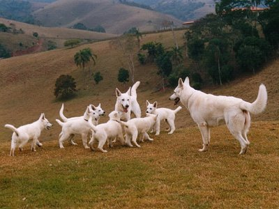 WhiteShepFamily.JPG