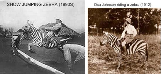 1890-zebra-ride2.jpg