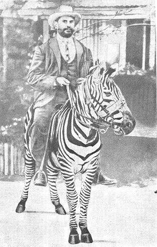 1907-zebra-ride.jpg