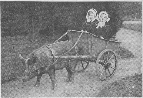 1910-pigcart.jpg