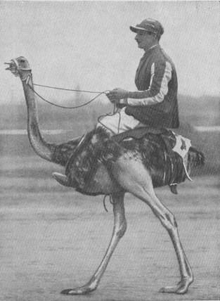 1929-ostrichride2.jpg