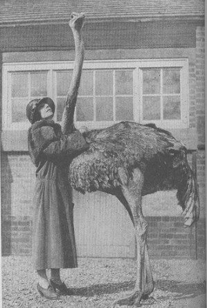 1929-ostrichride3.jpg