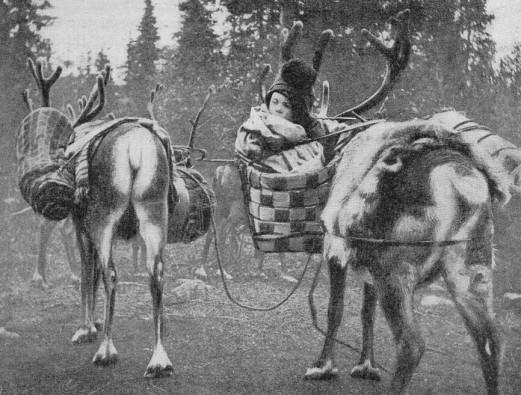 1936-reindeer.jpg