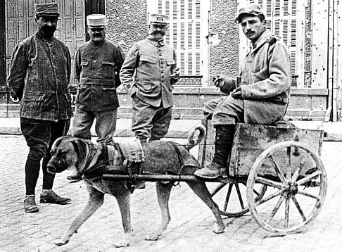 dogcart1.jpg