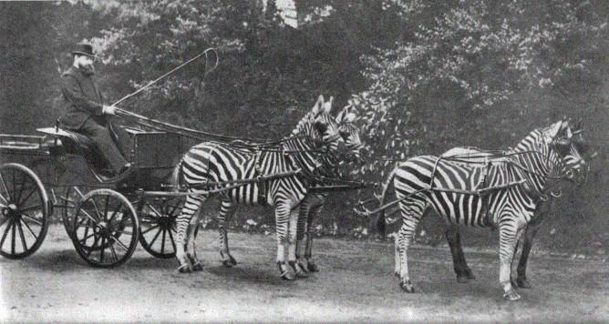 zebra-ride3.jpg