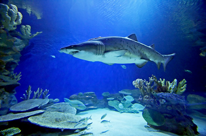 shark-beaches-10-g.jpg