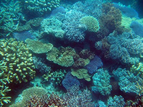 coral-gardens-coral.jpg
