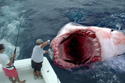 Real Images Megalodon Shark Caught