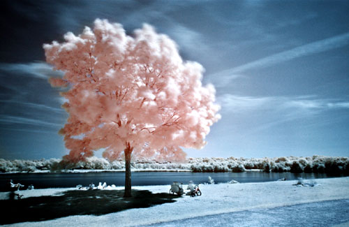 cotton-candy-tree.jpg