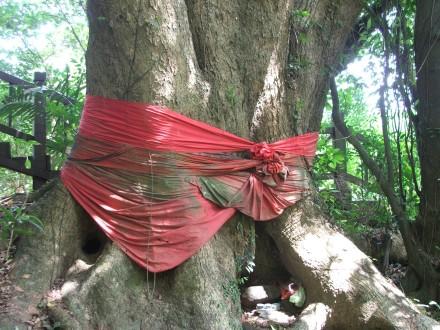 qixing-sacred-tree.jpg